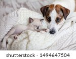 Stock photo dog and cat resting together dog and kitten friends 1494647504