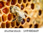 close up of bees in a beehive... | Shutterstock . vector #149480669