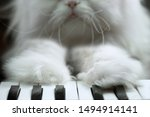 White Fluffy Persian Cat Plays...