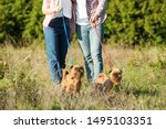 Stock photo owners walking their adorable brussels griffon dogs in park 1495103351