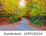Autumn. Colorful Leaves Fallin...