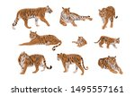 Set Of Realistic Tiger And Cubs ...