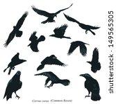 common raven illustration | Shutterstock .eps vector #149565305