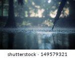 Drops Of Heavy Rain In The...