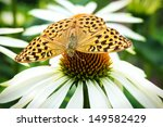 Silver Washed Fritillary...