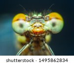 Stock photo extreme macro shot eye of zygoptera dragonfly in wild close up detail of eye dragonfly is very 1495862834