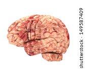 anatomy brain   side view... | Shutterstock . vector #149587409