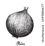 herbal plants  illustration...   Shutterstock .eps vector #1495884677