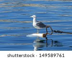 Close to a sea-gull on an island near Marseille in South France - stock photo