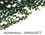 background and texture of green ...   Shutterstock . vector #1496262677