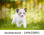 Stock photo siamese kitten meowing 149633891