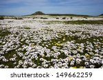 spring wild flowers  west coast ... | Shutterstock . vector #149662259