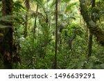 brazil nature. jungle flora in... | Shutterstock . vector #1496639291