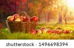 Apples In A Basket Outdoor....