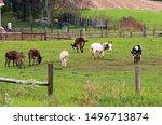 Autumn rural landscape with...