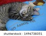 Stock photo kitten sleeping on a blue pillow 1496738351