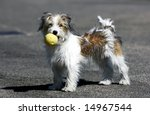 Stock photo domestic dog whit yellow ball 14967544