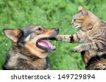 Stock photo dog playing with cat 149729894