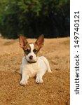 Lovely Puppy Lying Portrait An...