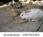 Stock photo feeding rabbits cute young rabbits are eating readymade rabbit food from a tray in rabbits farm 1497441941