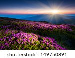 magic pink rhododendron flowers ... | Shutterstock . vector #149750891