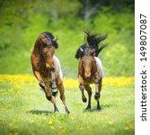 two little appaloosa foals... | Shutterstock . vector #149807087