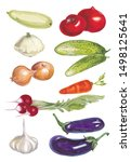 watercolor botanical... | Shutterstock . vector #1498125641