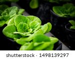 Small photo of New hydroponics methods, Hydroponics method of growing plants using soil.