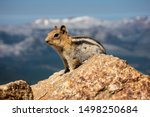 A Plump Chipmunk Eagerly Waits...