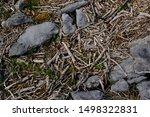 Exposed Rough Grey Limestone...