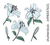lilies flowers botanical... | Shutterstock .eps vector #1498337621