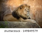 Large  Powerful Male Lion Sits...