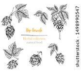 set of botany hand drawn sketch ... | Shutterstock .eps vector #1498990547