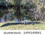 Exotic Views Of Several Florid...