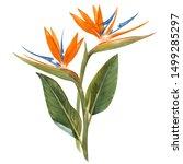 watercolor floral tropical... | Shutterstock . vector #1499285297