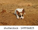 Puppy Portrait With Head Down