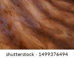 Animal Fur Background. Texture...