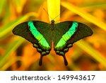Green Swallowtail Butterfly...