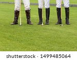 The Legs Of Three Male Horse...