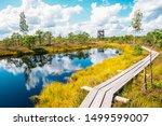 Kemeri National Park Bog trail in Latvia