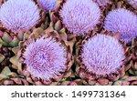 Lilac Flowering Globe...
