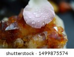 Stock photo water drops on a rose petal on top of a citrine crystal cluster pink rose petal golden healing 1499875574