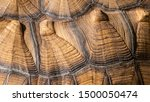 Stock photo beautiful textures and patterns of the african spurred tortoise 1500050474