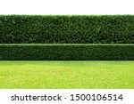 Long Tree Hedges, double layers  (two steps); Small and Tall hedges.   Upper part isolated on white background.
