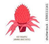 Red Pineapple Flat Vector...
