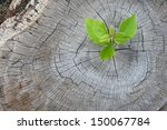 Small photo of New development and renewal as a business concept of emerging leadership success as an old cut down tree and a strong seedling growing in the center trunk as a concept of support building a future.
