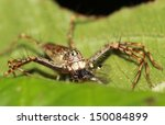 jumping spiders. | Shutterstock . vector #150084899