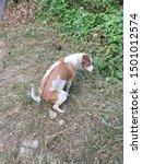 dog animal brown cute pet... | Shutterstock . vector #1501012574