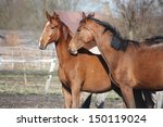 two adorable horses nuzzling... | Shutterstock . vector #150119024