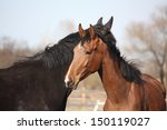 two adorable horses nuzzling...   Shutterstock . vector #150119027